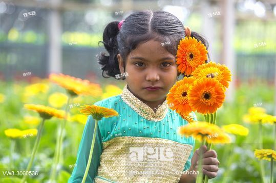 In Many Areas Of Bangladesh Flower Is Being Cultivated For Commercial Purposes Fetching Flowers