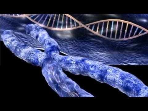 """A no ser que otra investigación científica pueda demostrar, más allá de toda duda, que la única fuente posible de los genes extra es en efecto la bacteria, y a menos que sea entonces también resuelto que la infección (""""transferencia horizontal"""") fue desde la bacteria al Hombre y no desde el Hombre a la bacteria, la única otra solución disponible será aquella ofrecida por los textos sumerios hace milenios.    Hasta entonces, los enigmáticos 223 genes permanecerán como una alternativa --"""