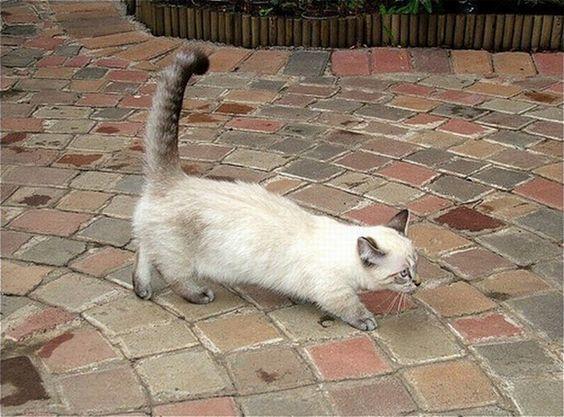 cat02.jpg (700×518)