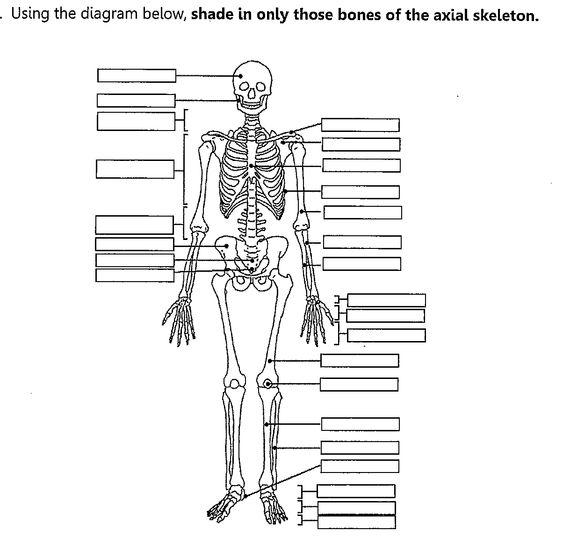 Printables Axial Skeleton Worksheet axial skeleton worksheet fill in the blank yahoo image search results