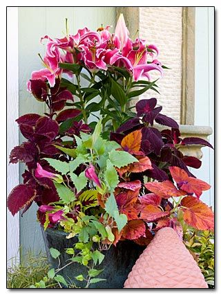 Coleus and lilies in a container.