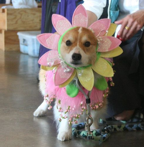 Flower headpieces. | 26 Things That You're Forced To Wear When You're A Corgi