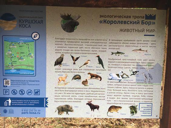 Информация о животных видах на Курской косе. Фото Vladimir Shveda