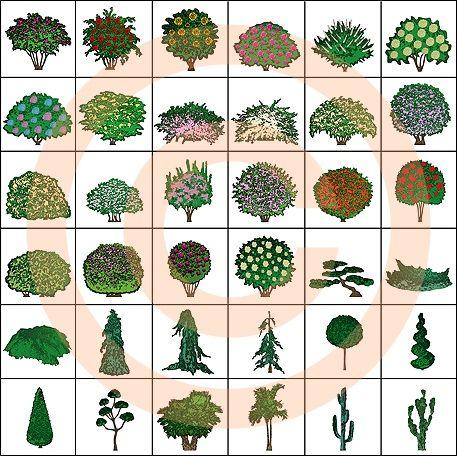 Landscape design symbols ornamental shrubs color for Design of ornamental plants