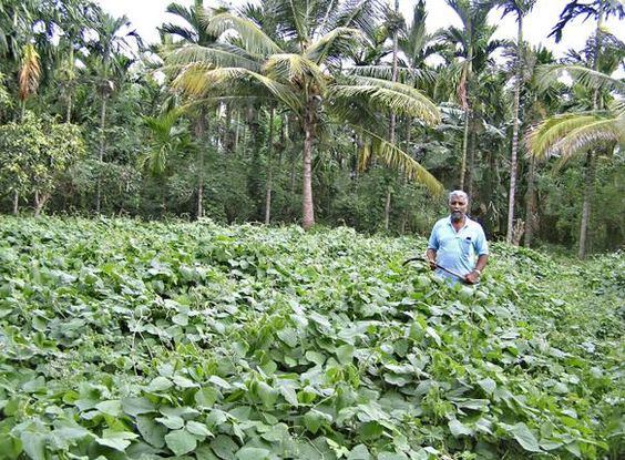 A farmer's 'natural solution' to agricultural crisis