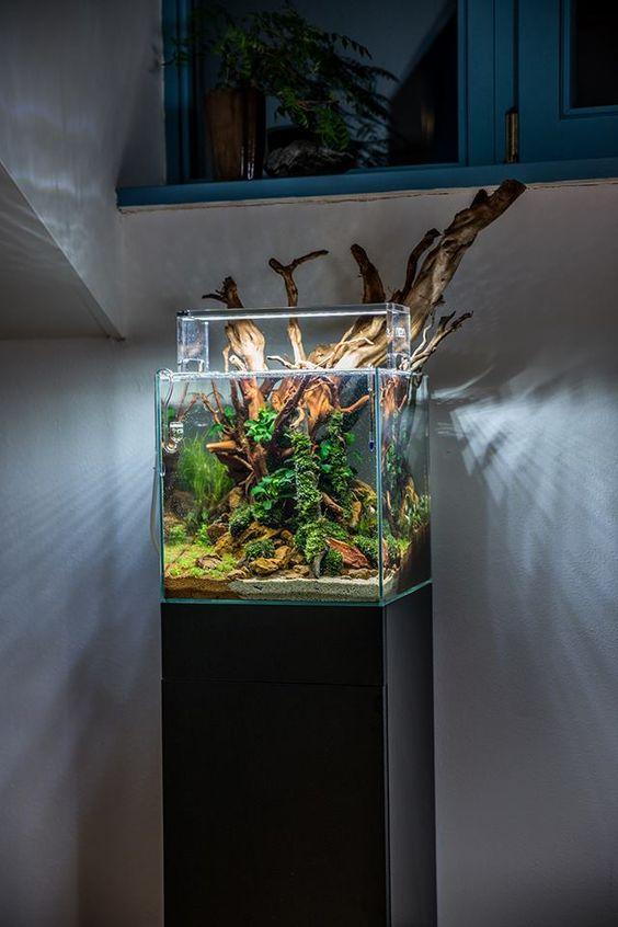 An aquascape by Voladuson: ?Big wood in small tank? Pass or fail ...