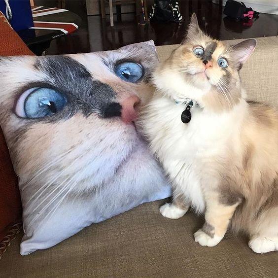 Ma vie est en ruine 😸❤️ De: doubles vision Plus de chats dans votre vie: ð ... - #Chats #dans #de #doubles #ð #en #est #ma #ruine #vie #vision #votre
