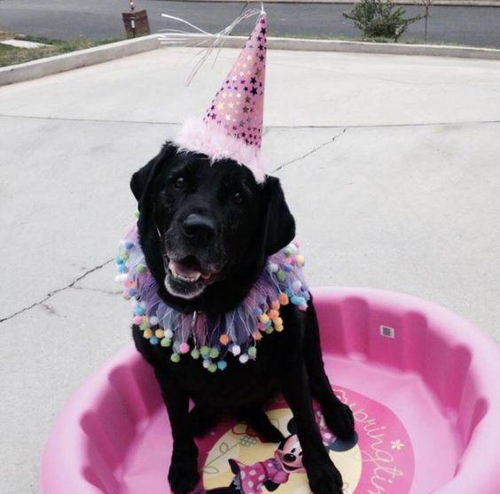 Happy 12th Birthday DaLLas :-)! #happybirthday #dogoftheday #prettyinpink #ilovemydog #bestdog #doglife #doglover #allmykidshavepaws www.fourpawsplace.com