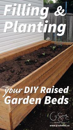 Filling And Planting Diy Raised Gardens Gardens Raised