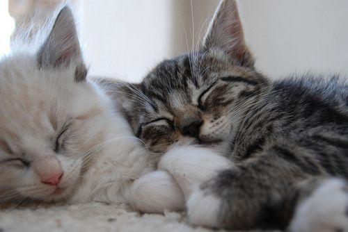 DOLLFACE: Crazy Cats, Bucket List, Kitty Cat, Sleepy Kitty, Sleepy Kitties, Crazy Cat Lady, Cute Kittens, Kittens Cuddling