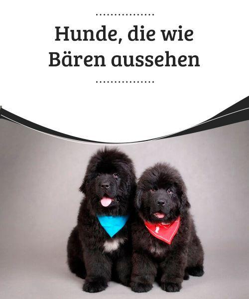 Baren Oder Hunde Hunde Die Wie Baren Aussehen My Animals Hunde In 2020 Hunde Hunde Rassen Pudel Welpen