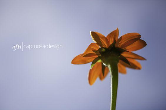 afH Capture+Design: Sam Davis House Smyrna, TN