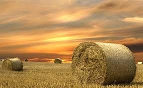 "www.fsa.usda.gov/FSA/hayNet FSA Expands Online Hay Net to Include Grazing Acres Locator Tool USDA Farm Service Agency (FSA) has expanded its ""go-to"" online resource Hay Net to include the option to list a need for grazing acres or to list acres available for grazing."