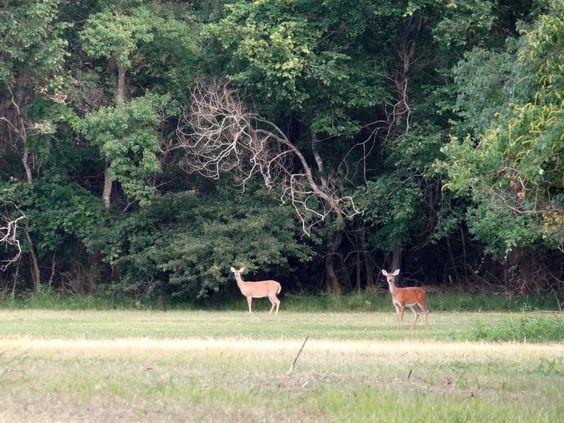 Deer at Bear Creek Pioneers Park | H-Town-West Photo Blog