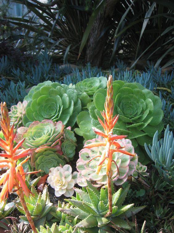 venice succulent garden 4 | Flickr - Photo Sharing!