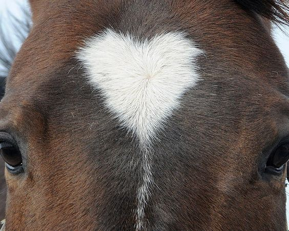 valentine's day cat names