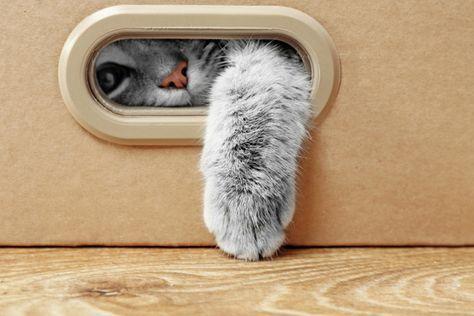 5 choses à faire pour amuser votre chat quand vous n'êtes pas là