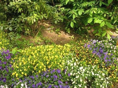 Botanical Gardens Duisburg Duissern Duisburg Botanischer Garten