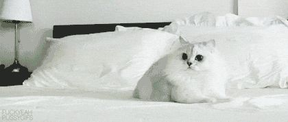 -- These GIF's are hilarious, just try to hold your laugh in...  27 Cats That Just Can't Handle It