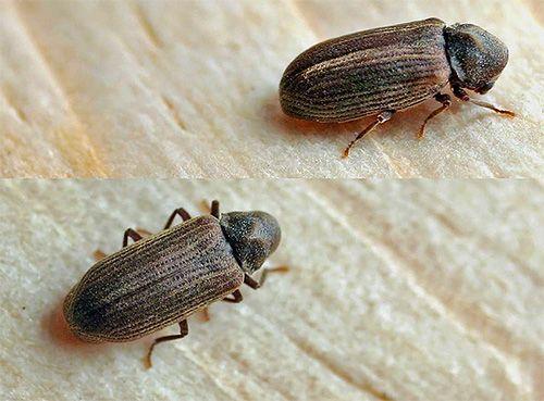 شركة تنظيف حشرات 0559099219 Stud Earrings