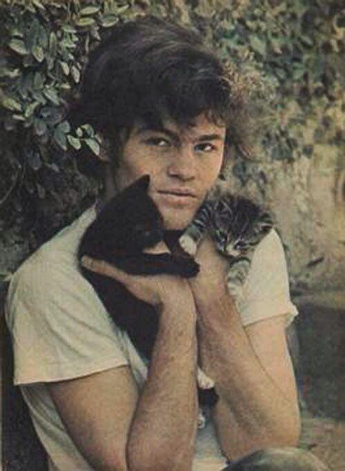 Image result for MONKEES CAT BURGLARS