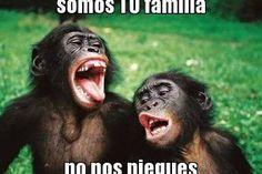 Memes Chistosos Para La Familia 11 Memes De Monos Memes Chistosisimos Fotos De Monos Graciosos
