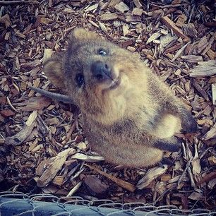 """""""And awesome people like YOU!"""" 