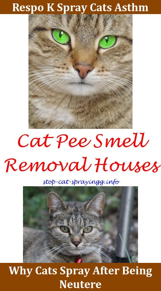 Raid Ant Spray Safe For Cats Cat Spray Cats Cat Spray Smell