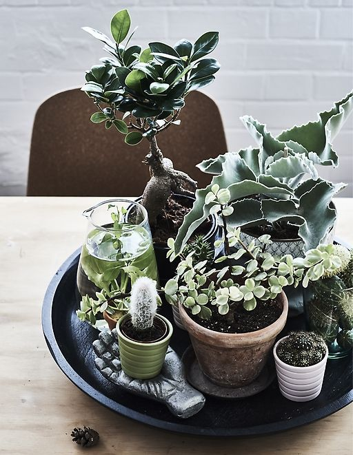 Home Visit Make An All Year Round Indoor Garden Met Afbeeldingen
