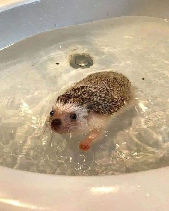 Just Keep Swimming   SWIMMING               SWIMMING             This Cute Boi having a bath  #Music #IndieArtist #Chicago