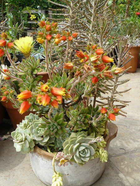 Indoor And Outdoor Succulent Garden Ideas Shelterness Flowers Garden Outdoor Spaces