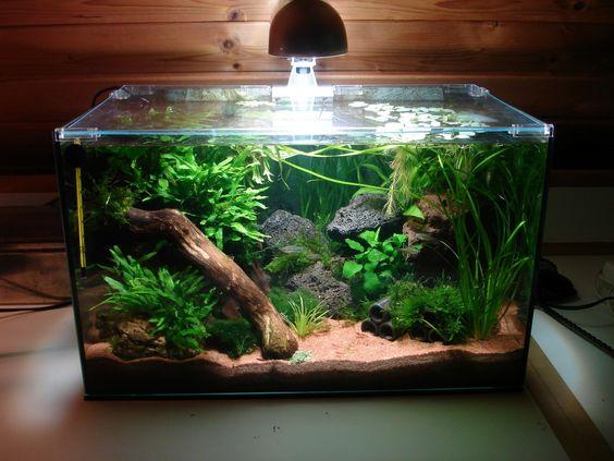 Aquascaping and aquarium on pinterest for Aquarium katalog
