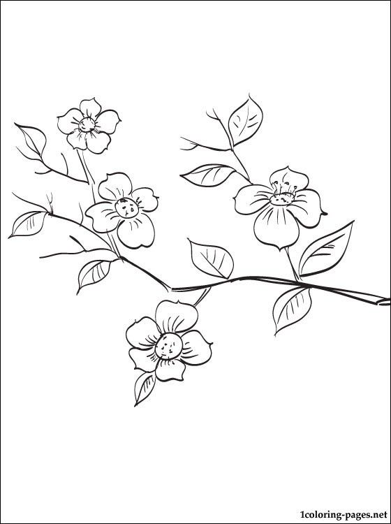 Flowering Fruit Tree Branch Coloring Page Coloring Pages Fruit