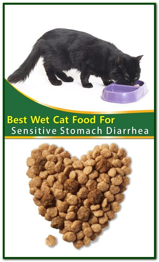 Best Wet Cat Food For Sensitive Stomach Diarrhea If You Have A Cat That Struggles With A Sensitive Stomach Or Issues With Cat Food Best Cat Food Wet Cat Food