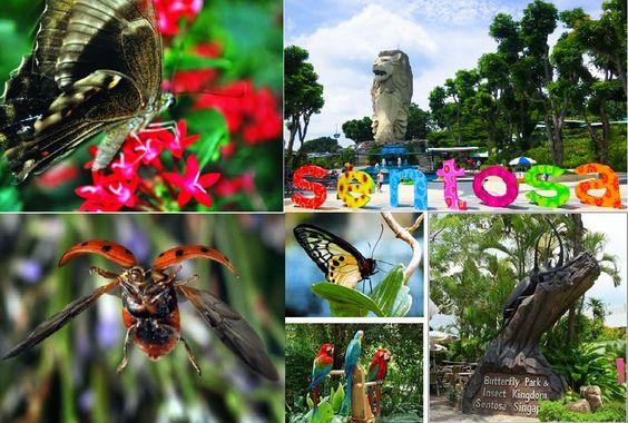 Sở hữu hơn 3000 loài bướm và côn trùng