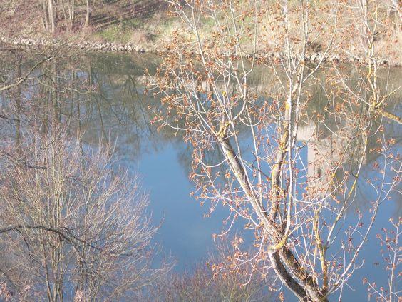 Schöner Anblick eines Flusses mit Bäumen an seinem Ufer - meine ewigen Freunde.