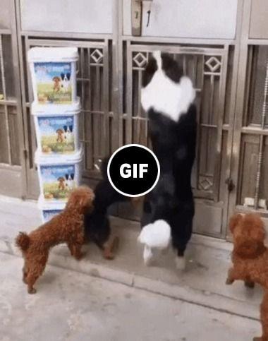 Veja a esperteza desses cães, parecem até gente grande!!