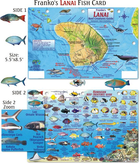 Snorkeling Fish And Diving On Pinterest