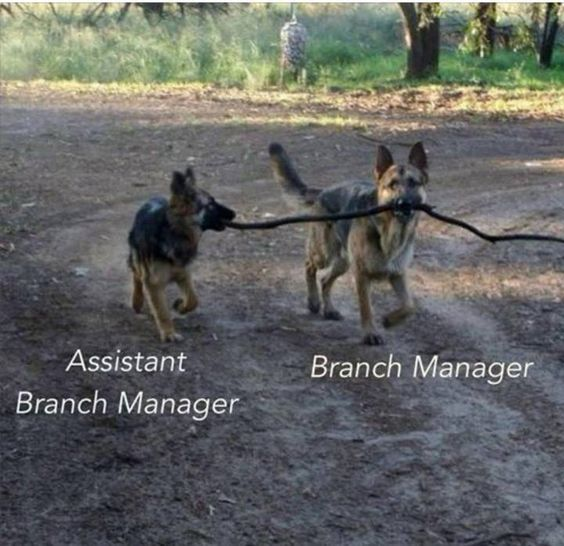 Assistant Branch Manager - Branch Manager Ha! Pinterest Humor - branch manager job description