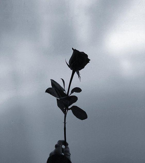 Kumpulan 75 Gambar Bunga Mawar Cantik Terbaru Dyp Im