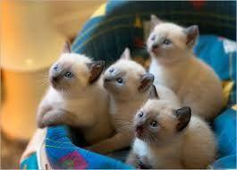 foto chiameche kitten - Google zoeken