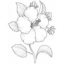 R sultat de recherche d 39 images pour dessin fleur noir et Fleur noir et blanc
