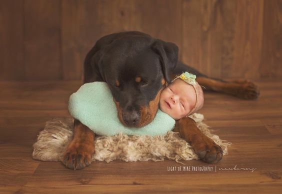 Light of Mine Photography | newborn with dog #Rottweiler #baby #photo: