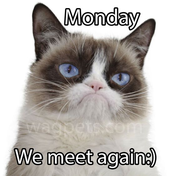 Monday we meet again