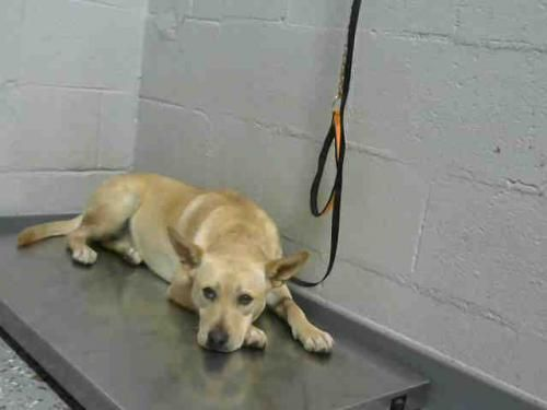 Pin On Rescue Pets On Borrowed Time Death Row No Pin Limits