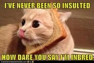 funny cat pictures - IVE NEVER BEEN SO INSULTED  HOW DARE YOU SAY IM INBRED