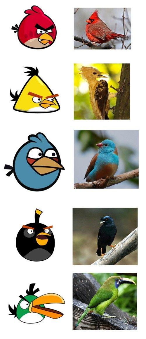 ¿Los verdaderos Angry Birds,  tendrán tan mala leche como los del juego?