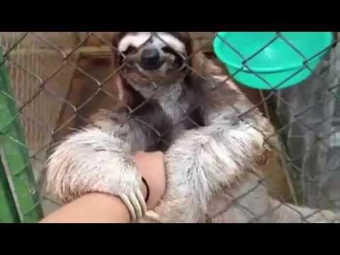 Heart melting sloth holding hands!