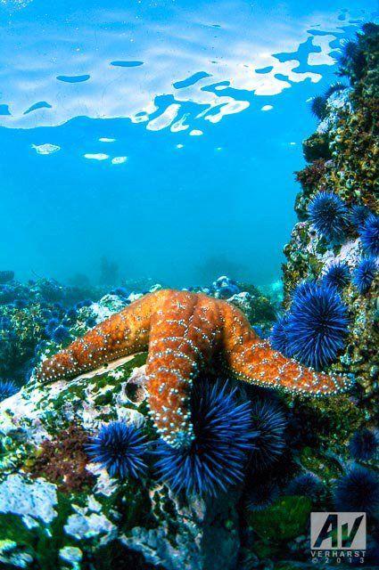 star fish laying on anemone.