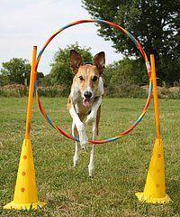 Hundetrick: Reifensprung